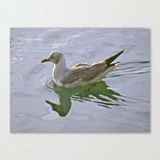 Seagulls Swim Canvas Print