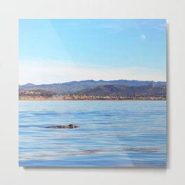 Grey Whale at Dusk Metal Print