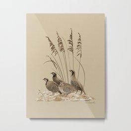 Chukar Partridges Metal Print