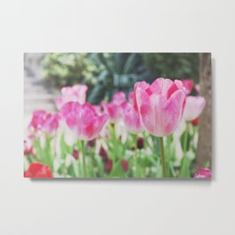 Winter tulip Metal Print