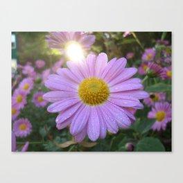 Chrysanthemum Sunrise Canvas Print