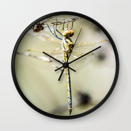 """Holding On""  - Dragonfly Wall Clock"