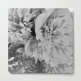 Peonies in Black and White Metal Print