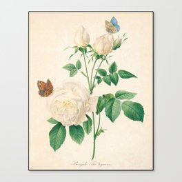Rose Flower Color Pencil Hand Drawing Canvas Print