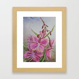 Fireweed Framed Art Print