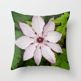 Pale Pink Clematis Throw Pillow
