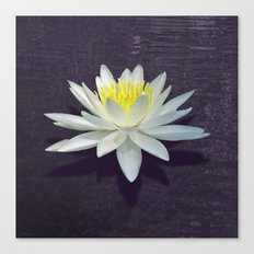 Lily with Purple Ripples Canvas Print