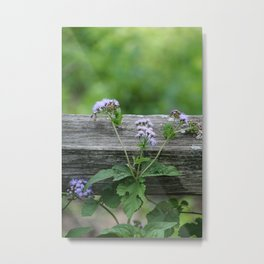 September Wildflower Metal Print