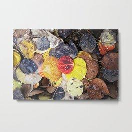 Multicolored Aspen Leaves in Woods Metal Print