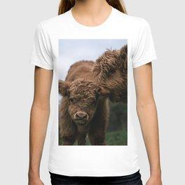 Scottish Highland Cattle Calves - Babies playing T-shirt