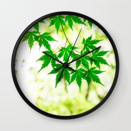 Green leaves of Japanese maple Wall Clock