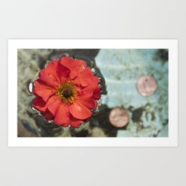 Floating Flower Art Print