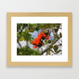 Flame of the Forest Framed Art Print