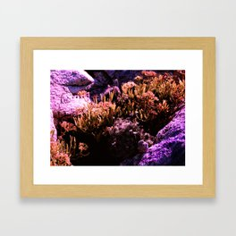 Microcosmos Framed Art Print