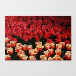 Orange Red….. Canvas Print