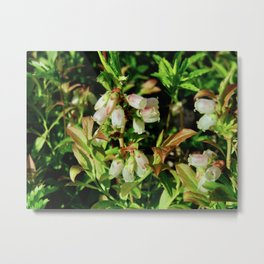 Tiny Blossoms on a Dirt Road Metal Print
