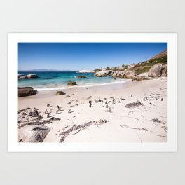 Penguins on Boulders Beach in Cape Town, South Africa Art Print