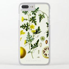 Citrulus - Vintage Illustration Clear iPhone Case