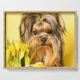 Spring Yellow Crocuses With Yorkie Puppy  Serving Tray