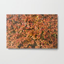 Autumnal Immersion Metal Print