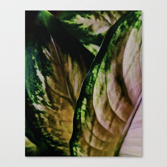 Lush Glow, Dieffenbachia Canvas Print