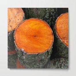 The freshly felled logs  Metal Print
