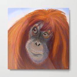 Pretty Sumatran Orangutan Portrait Metal Print