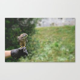 What about flying Canvas Print