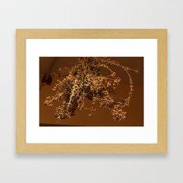 drying oregano Framed Art Print