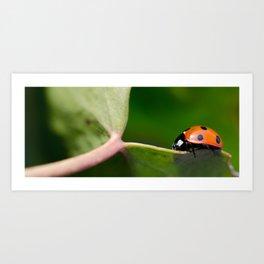 Ladybug walking on leaf Art Print