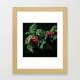 Rowan-berry Framed Art Print