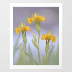 Wild Summer Iris Art Print