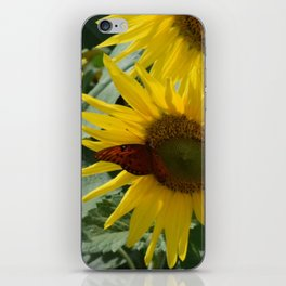A Butterfly on a Sunflower in the Smoky Mountains iPhone Skin