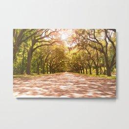 Savannah Oak Trees Metal Print