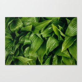 Some Leafy Stuff Canvas Print