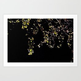 leaves in the moonlight Art Print