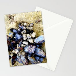 Mussels Photo Stationery Cards