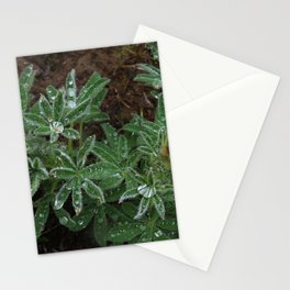 Wet Lupine Stationery Cards