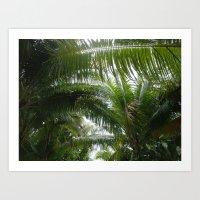 Coconut Dreams Art Print