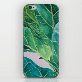 Ficus lyrata iPhone Skin