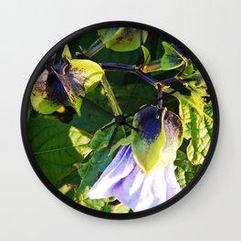 Shoo Fly - Apple of Peru - Nicandra Wall Clock