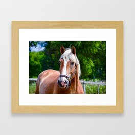 Equine Beauty Framed Art Print