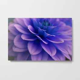 purple dahlia Metal Print