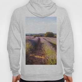 Lavender Fields at Sunset Hoody