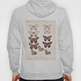 Moths And Butterfly Vintage Scientific Hand Drawn Insect Anatomy Biological Illustration Hoody