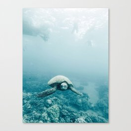 Sea Turtle Adventures Canvas Print