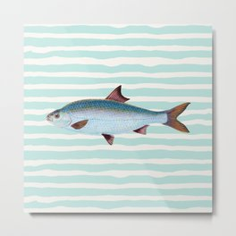 VINTAGE BLUE FISH Metal Print