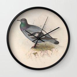 ROCK DOVE (3) Wall Clock