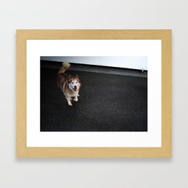 Husky Run Framed Art Print