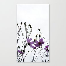 Mexican Aster 2 Canvas Print